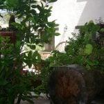 verano-de-2013-y-apartamentos-terraza-2013-agosto-090